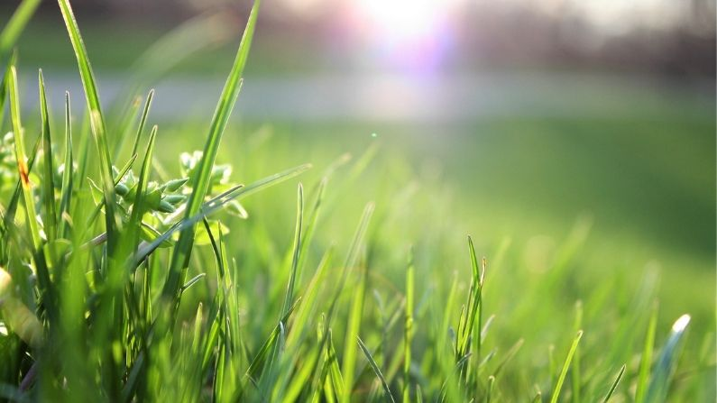 Lawn Care: How to Achieve the Perfect Lawn