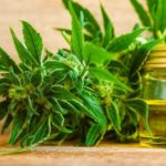 CBD: 7 Surprising Health Benefits According To Research