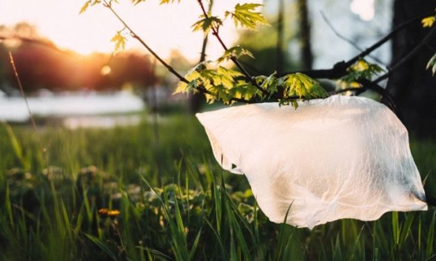 Plastic Bags: 10 Controversial Facts You Need To Know